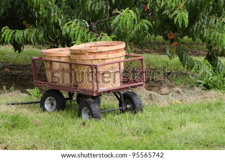 """Basket Wagon"" -- U-Pick Orchard -- Fennville, Michigan, USA. - stock photo"