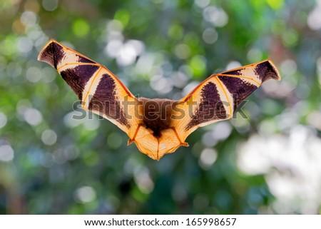 Bat flying  - stock photo
