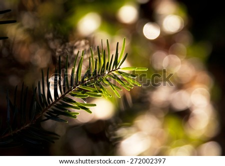 Beautiful Christmas pine  - stock photo