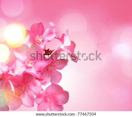 Beautiful Floral - stock photo