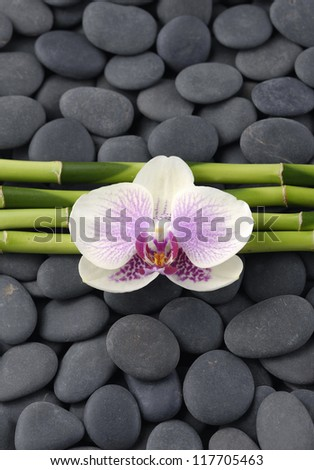 Beautiful orchid and thin bamboo grove on zen pebbles - stock photo