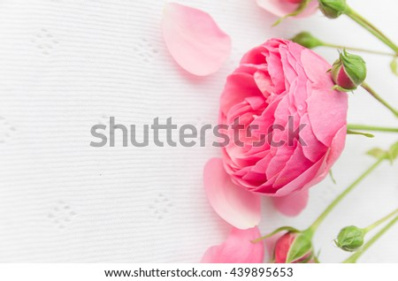 Beautiful pink rose on a white background with petals and leaves, place for text. gentle background for cards, invitations, gift - stock photo
