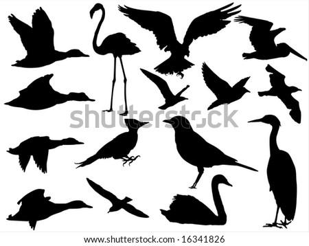15 bird silhouette - stock photo