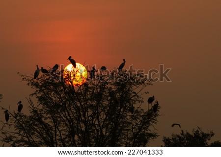 Birds in sunset silhouette - stock photo