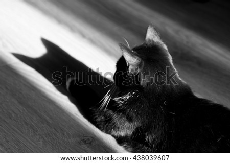 black cat and its reflection on the floor early in the morning in a room - stock photo