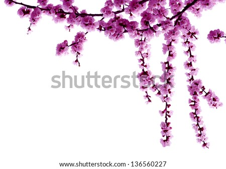 blossoms isolated on white - stock photo