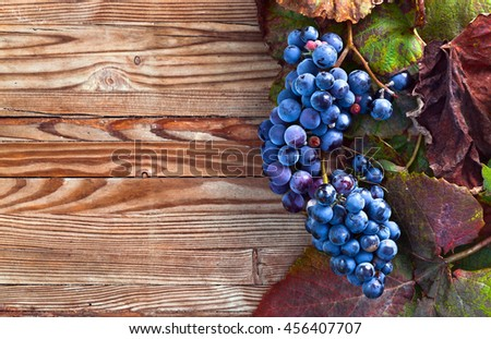 blue grapes on a old wooden table - stock photo