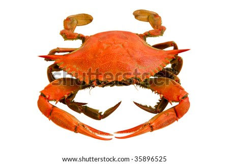 boiled crab - stock photo