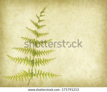 branch of a fern on old paper background - stock photo