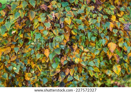 Branch with leaves in the autumn. Selective focus with shallow depth of field. - stock photo