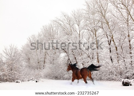 Brown horse on a snow farm under a heavy snowfall - stock photo