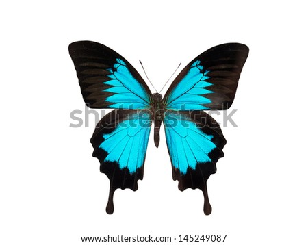 butterfly isolated on white background  - stock photo