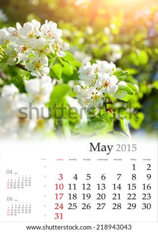 2015 Calendar. May. Blossom apple tree in the sunlight - stock photo