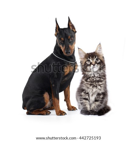 cat and dog in front of white background - stock photo
