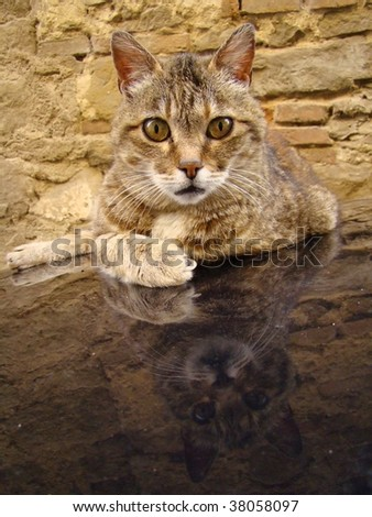 cat reflection - stock photo