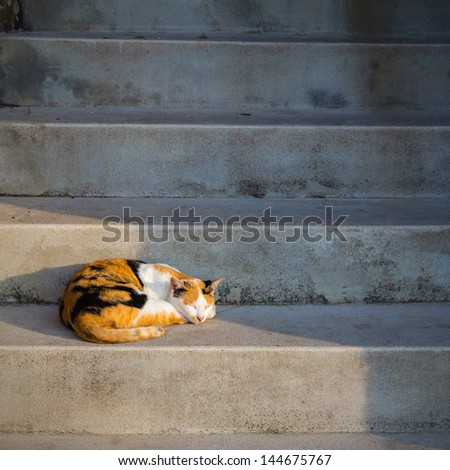 cat sleeping on stair - stock photo