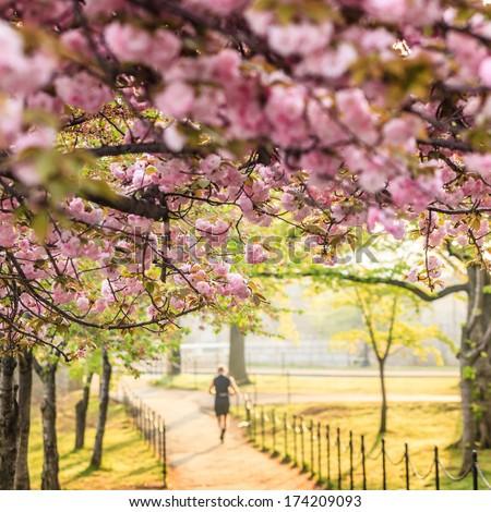 Cherry Blossom Festival. Washington, DC - stock photo