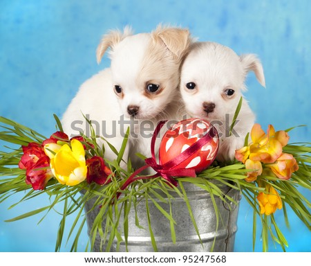 Chihuahua puppies and Easter eggs in green grass - stock photo