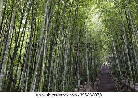 China Yixing Bamboo mountain - stock photo