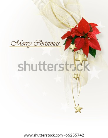 Christmas background with  Poinsettia - stock photo