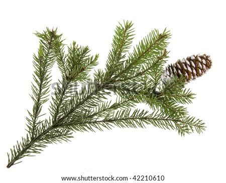 Christmas evergreen twig with cone isolated  on white background - stock photo