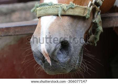 close up horse nose, hole - stock photo