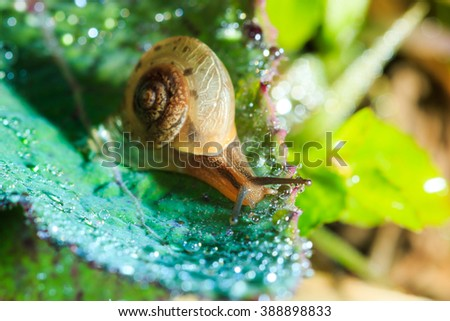 Close-up of snail on a green leaf - stock photo