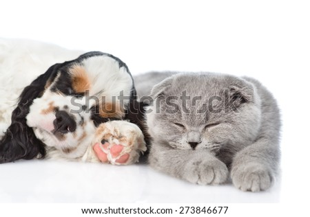Cocker Spaniel puppy sleeping with a cat. isolated on white bac - stock photo