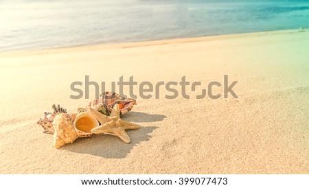 cockleshells and starfish lie ashore sea - stock photo