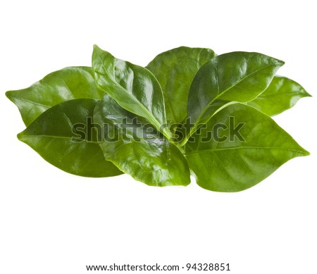 coffee leaves heap close up isolated on white - stock photo