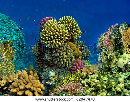 Colourful kind of a landscape under water - stock photo