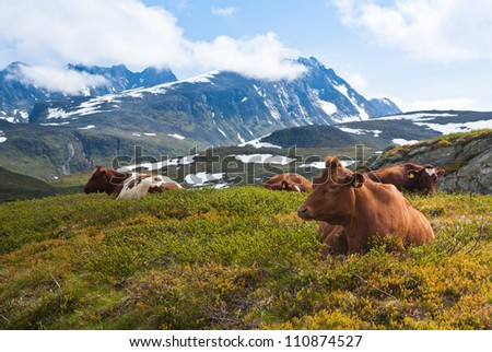 cow resting on green grass - stock photo