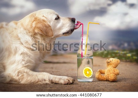 cute dog drinking lemonade with a teddy bear - stock photo