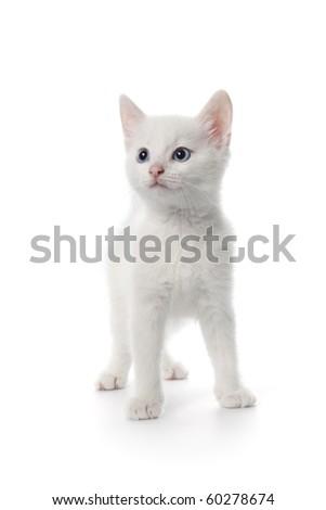 Cute white kitten with blue eyes on white background - stock photo
