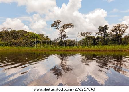 Cuyabeno Wildlife Reserve, Sucumbios Province, sunny day, amazon jungle - stock photo