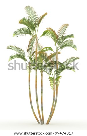 3d  areca palm isolated over white - stock photo