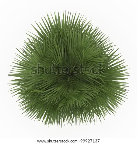 3d   California Fan Palm isolated over white - stock photo