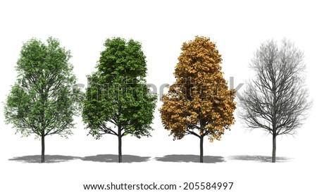 3D computer rendered illustration Acer platanoides Four Seasons - stock photo