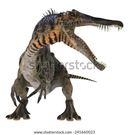 3D digital render of a curious Cretaceous dinosaur Spinosaurus or spiny lizard isolated on white background - stock photo