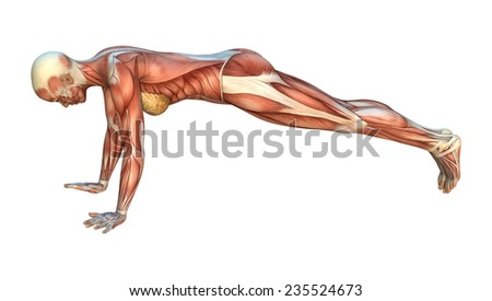 3D digital render of a female figure with muscle maps isolated on white background - stock photo
