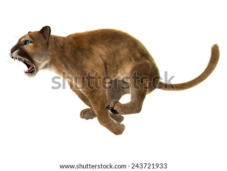 3D digital render of a jumping puma, also known as a cougar, mountain lion, or catamount, isolated on white background - stock photo