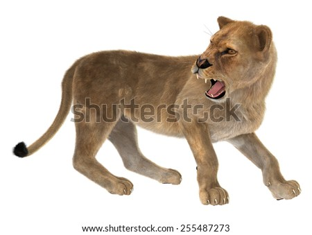3D digital render of an angry female lion isolated on white background - stock photo