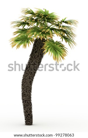 3d  European Fan Palm isolated over white - stock photo
