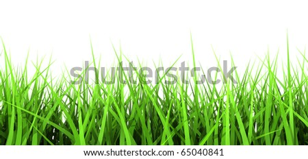 3D generated Green Blades of Grass Isolated on White Background - stock photo