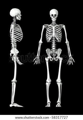 3D human skeleton medical illustration - stock photo