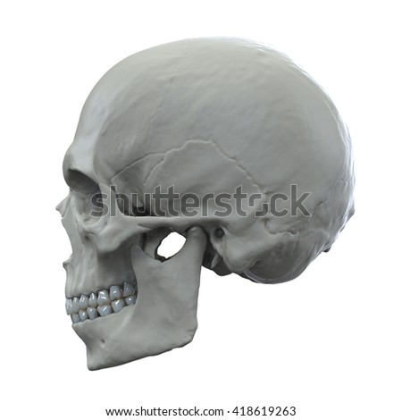 3d human skull isolated on white background - stock photo
