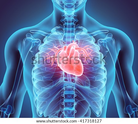 3D illustration of Heart - Part of Human Organic. - stock photo