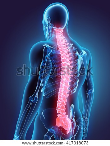 3D illustration of Spine - Part of Human Organic. - stock photo
