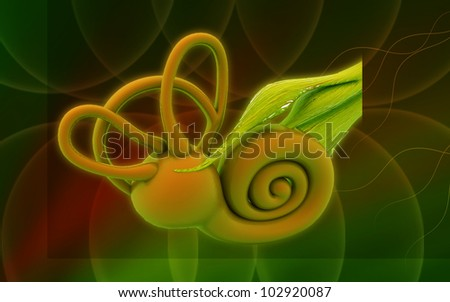 3d inner ear. cochlea on a colour background - stock photo