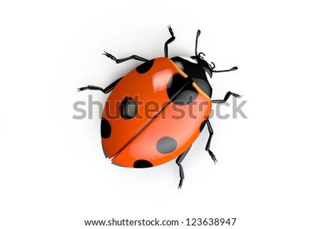 3D ladybug isolated on the white background - stock photo